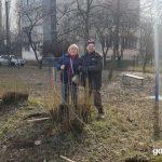 В Горі висадили 60 дерев на вулиці Науки