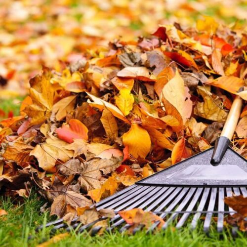 14 листопада 2020р. відбудеться суботник з прибирання опалого листя на дитячих майданчиках
