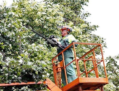 Про дотримання Правил охорони електричних мереж