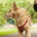 Про обов'язки осіб, які утримують домашніх тварин